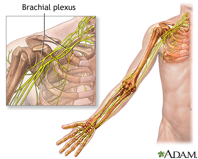 Brachial Plexus Uf Health University Of Florida Health