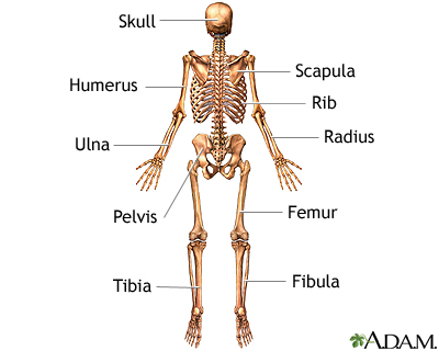 x-ray - skeleton | uf health, university of florida health, Human Body