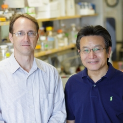 Brian K. Law, Ph.D., (left) is an associate professor in the UF College of Medicine's department of pharmacology and therapeutics. Jianrong Lu, Ph.D., is an associate professor in the College of Medicine's department of biochemistry and molecular biology.