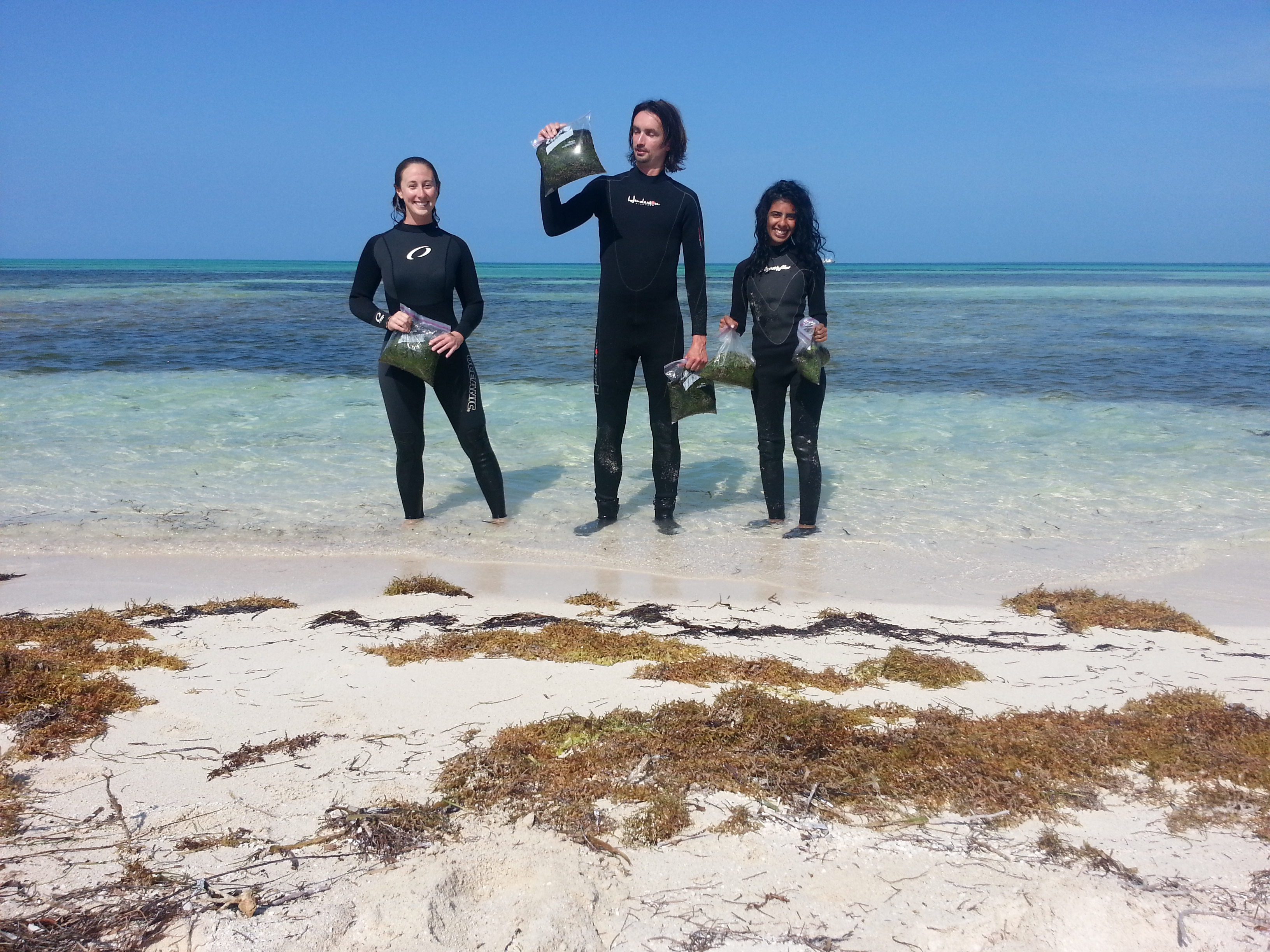 UF scientists Michelle Bousquet, Ph.D., Hendrik Luesch, Ph.D., and Fatma Al-Awadhi, Ph.D.,  collected seaweed off the coast of Boca Grande Key, an island about 15 miles west of Key West.