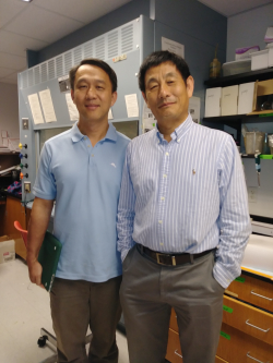 Lei Zhou, Ph.D., (left) is an associate professor in the UF College of Medicine's department of molecular genetics and microbiology. Sihong Song, Ph.D., is an associate professor of pharmaceutics in the UF College of Pharmacy.