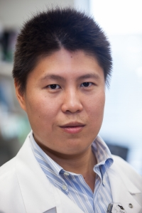 Chen Ling, Ph.D., a research assistant professor of pediatrics in the University of Florida College of Medicine