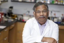 UF researchers are working to develop a therapy for pulmonary hypertension that will be delivered in the leaves of plants. Mohan Raizada, Ph.D., a distinguished professor of physiology and functional genomics in the Evelyn F. and William L. McKnight Brain Institute of the University of Florida