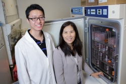 Research assistant Chao Xie (left) and Li-Jun Yang, M.D., professor of hematopathology in the UF College of Medicine's department of pathology, immunology and laboratory medicine, have published new research showing that the exercise-induced hormone irisin helps the heart function better.