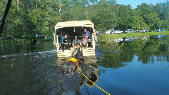 Members of the National Guard assisting the UF VETS team in the rescue of several horses stranded in floodwater in the aftermath of Hurricane Irma.