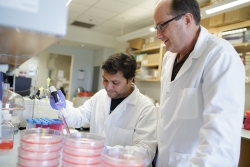 Dr. Thomas Schmittgen, pictured right, is studying a natural therapy for treating liver cancer by restoring microRNA levels in cancer cells.