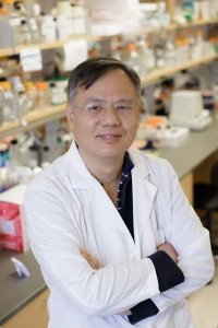 Shuang Huang., Ph.D., is a professor in the UF College of Medicine's department of anatomy and cell biology and a member of the UF Health Cancer Center.