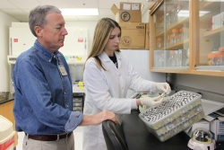 : Dr. Dan Brown and biological scientist Dina Michaels look over the mycoplasma collection that UF recently took possession of. (Photo by Sarah Carey)