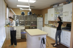 University of Florida veterinary students Dani Marks and Allison Vansickle measure the treatment room in a veterinary practice they visited in Ocala during their summer business management externship. The information is used in completing a fee analysis. (Photo courtesy of Dr. Martha Mallicote, University of Florida)