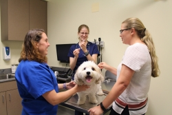 Dr. Jenna Rooks prepares to administer the canine influenza vaccine to a dog belonging to a UFCVM student on June 21. Assisting at right is UF veterinary technician Monique Bessette. (Photo by Sarah Carey)