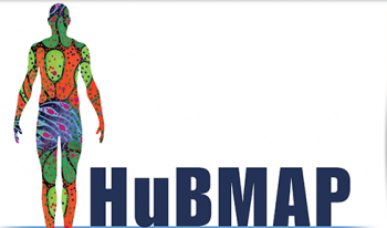 UF Health sets out to help create a 3D cellular map of the human body