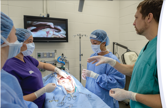 Artificial dogs that bleed, have a pulse help UF veterinary students hone surgical skills